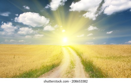 country road in gold wheat field under blue sky