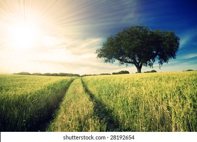 Country road in golden yellow field to the distant horizon under a blue cloudy sky and shiny sun-rays