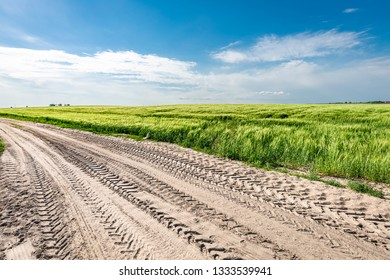 Country road and green field in summer in Poland