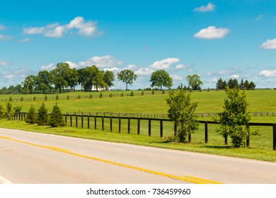 Country road. and green pastures of horse farms. Summer countryside landscape.