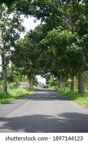 Country road lined with tree