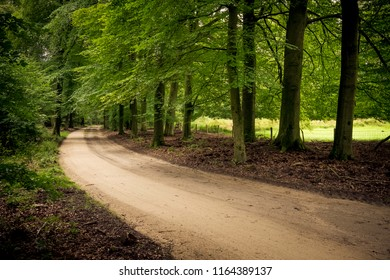 country road in a lush green environment