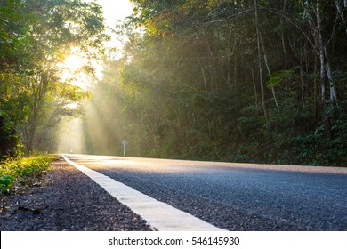 Country road in the morning with golden sunlight
