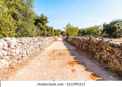 Country road near the town of Fasano in Salento Italy