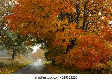 Country Road in north Poland. Pomerania (Pomorze) province. Autumn time/Autumn misty road