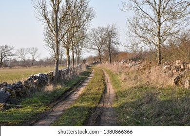 Country road in an old farmland with dry stone walls at the swedish island Oland