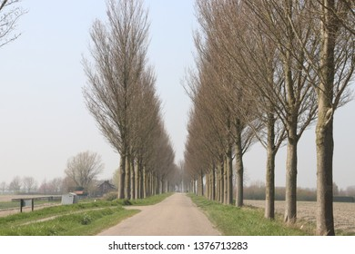 Country road on dyke between fields with poplar tree on side of the street