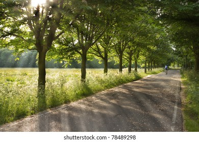 Country road on early morning in spring with lonesome racing cyclist - horizontal