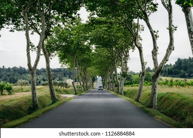 Country road perspective with trees on the sides in Provence, France