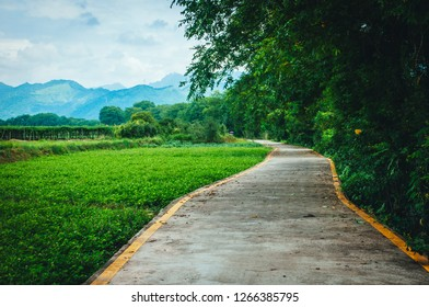 Country road scenery in summer