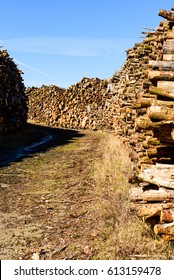Country road with stacks of timber on either side. This timber will most likely be used as biofuel.
