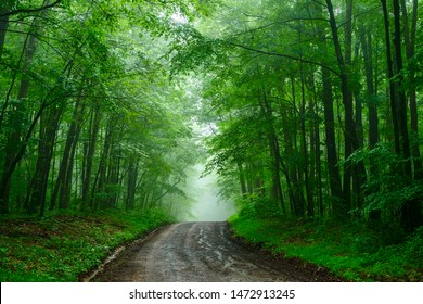 Country road in a summer rain shower, Webster County, West Virginia, USA