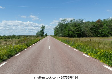 Country road surrounded with blossom road sides at the island Oland in Sweden