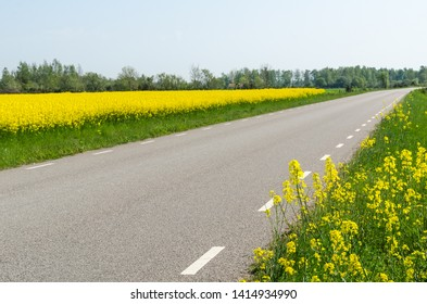 Country road surrounded by blossom rape seed fields at the swedish island Oland
