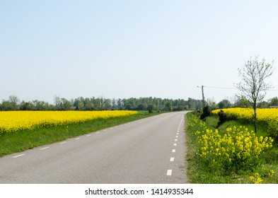 Country road through blossom canola fields at the swedish island Oland