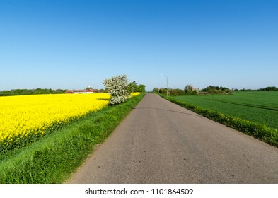 Country road through a colorful landscape by springtime at the swedish island Oland