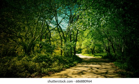 country road through a forest with arched trees in the summer