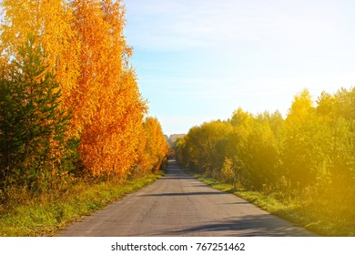 A country road through the forest. Scenic landscape of autumn trees. toned