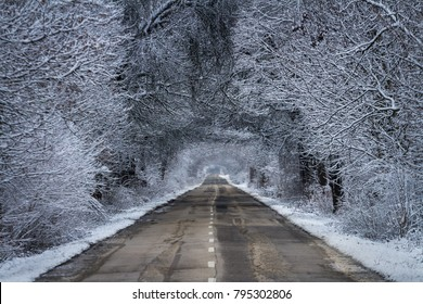 Country road through forest in winter