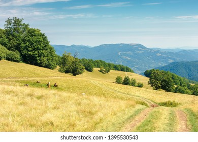 country road through grassy meadow in mountains. nature scenery with beech trees in the distance. sunny late summer landscape with clouds on a blue sky. beautiful carpathian countryside