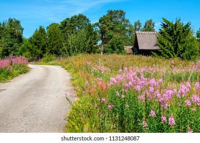 Country road through wildflowers. Estonia, Europe