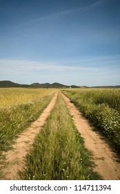 country road in a wheat field
