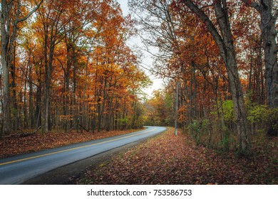 A country road winds through a forest of beautiful orange autumn foliage.