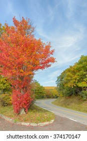 Country Roads: A maple tree showing the first autumn colors on Skyline Drive, in Shenandoah National Park, Virginia.