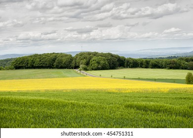 Country scene with wheat field