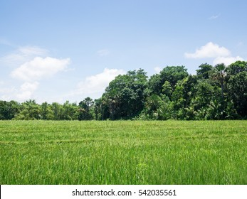 country side, grass