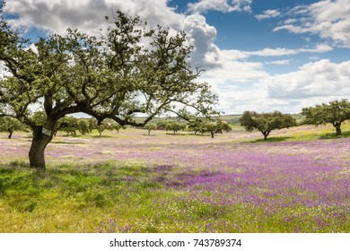 Country side with olive trees at Puebla de Guzman at Andalusia, Spain