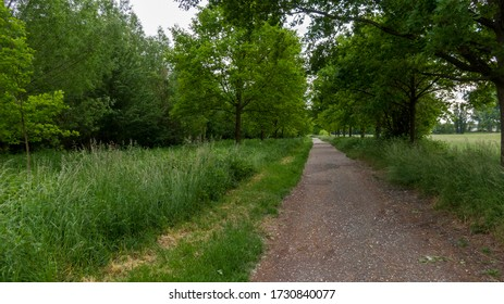Country side path with lush green around