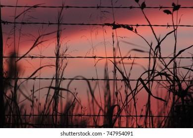 Country sun set