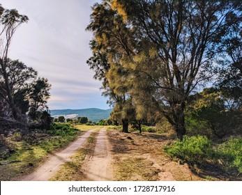 Country track, Flinders Island, Tasmania
