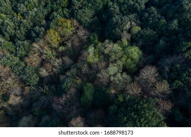 Countryside aerial view of a Cantabrian oak forest in Liendo Valley, Liendo Municipality, Cantabrian Sea, Cantabria Autonomous Community, Spain, Europe