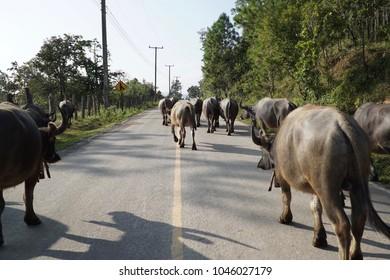 Countryside animals lifestyle.