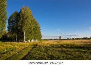 Countryside with a birch grove, ourdoors shot, summer