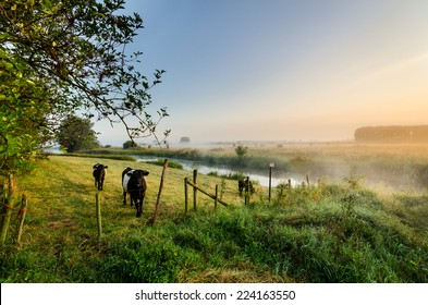 countryside europe at sunrise with grazing cows in the foreground