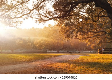 Countryside farm or ranch with dirt road and overhanging live oak branches and distant fields at sunrise or sunset and sun rays beaming across