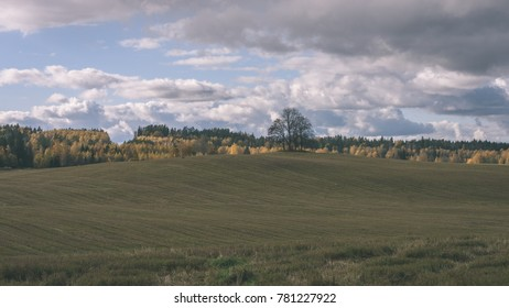 countryside fields in autumn with lonely gold colored trees and cloudy sky - vintage film effect