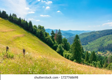 countryside fields and meadows on hills in summer. idyllic mountain landscape on a sunny day. scenery rolling in to the distant ridge. wonderful weather with fluffy clouds on a blue sky