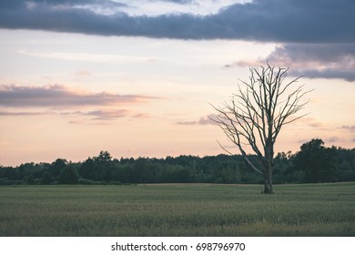 countryside fields in summer with forests in background and clouds above in dramatic sunset - vintage film look