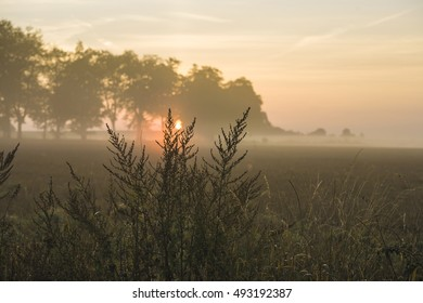 countryside  with fog in the morning