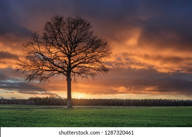 Countryside landscape with a beautiful tree and colorful sunset, Weelde, Flanders, Belgium