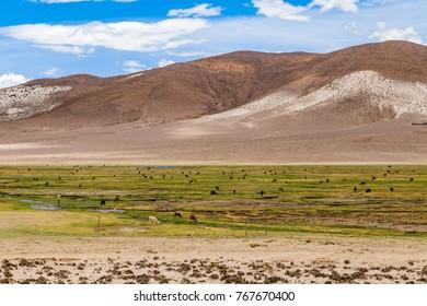 Countryside landscape in Bolivia