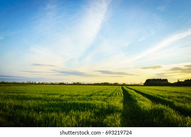 countryside landscape - farm field at sunset in spring
