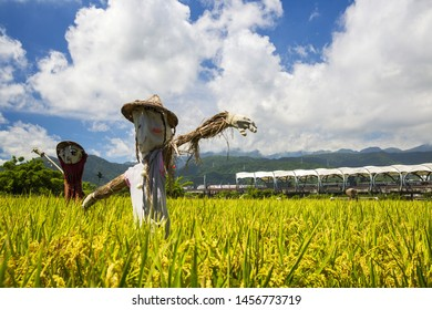 Countryside landscape, green field and  scarecrow. Dongshan Station;Yilan;Taiwan