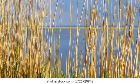 Countryside landscape on the lake. dry reeds on a background of blue clear water on a sunny day. fishing and camping. texture