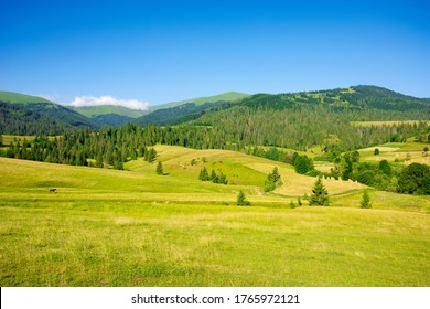 countryside landscape in summer time. trees on the fields and hills covered in green grass rolling through scenery in morning light. mountain ridge in the distance