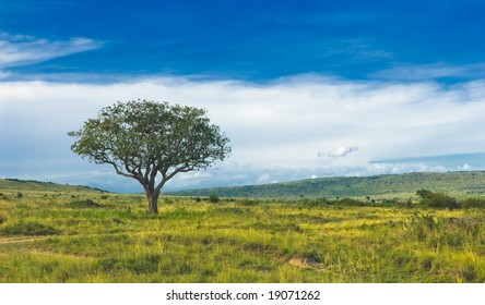 countryside landscape, tree standing in the field